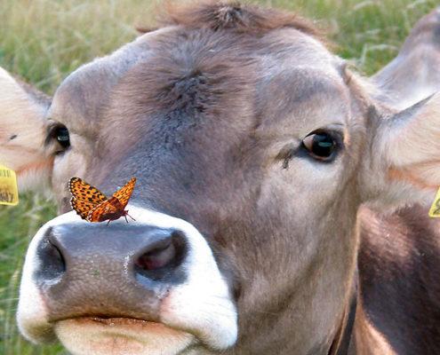 Entfaltung und Schmetterling - Muhh...